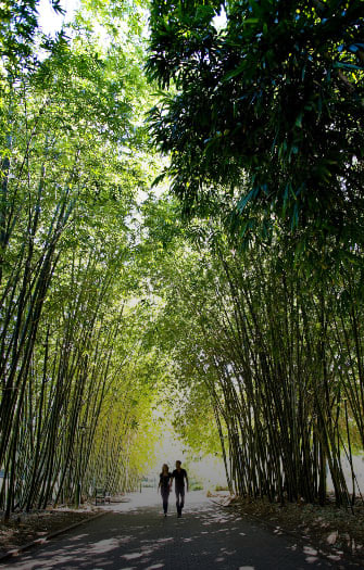 Mt Coot-tha & City Botanic Gardens