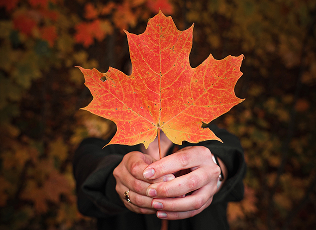 study english in canada or study french, person holding maple leave